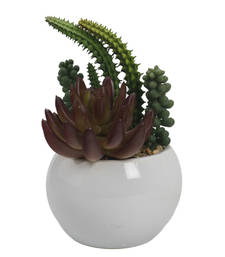 Buy Cute Green Artificial Plant with Glossy Finish Pot pot online