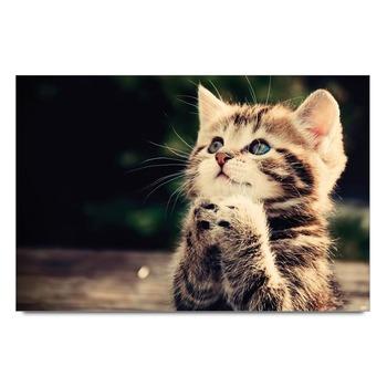 Cat Pray Poster