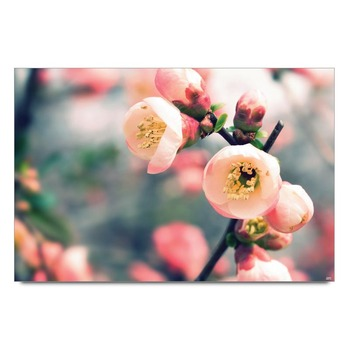 Pink Flower Buds Poster