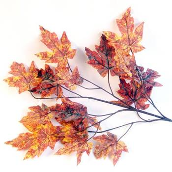 Maple Leaf (2 bunches)