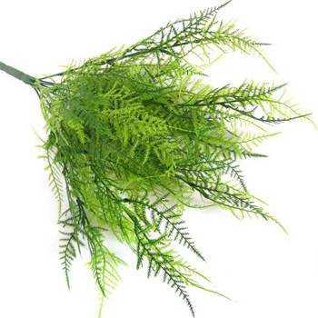 Fine Asparagus Ferns (1 bunch)