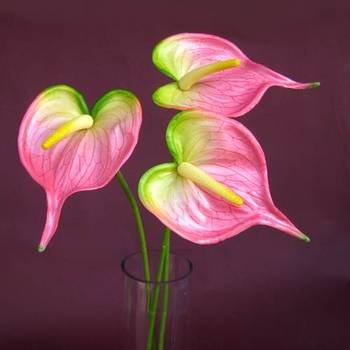 Anthuriums Natural Touch (Artificial) Lt. Pink