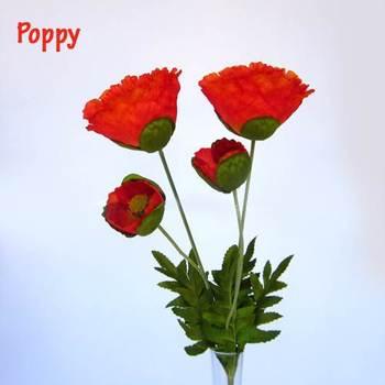 Orange Poppy Blooms
