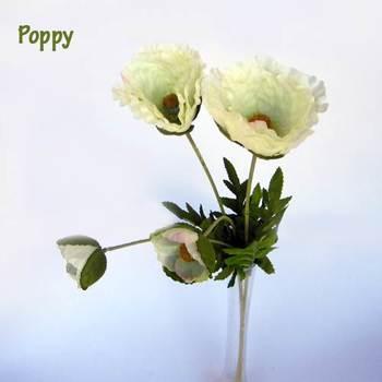 White Poppy Blooms