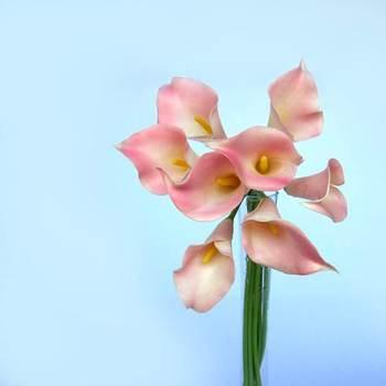 Pink Calla Lilies - 8 pcs