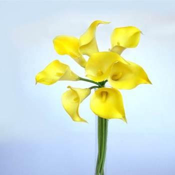 Yellow Calla Lilies - 8 pcs