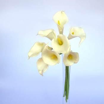 White Calla Lilies - 8 pcs