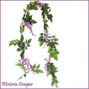 Wisteria creeper - 6 ft