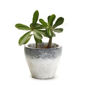 Conical Shape Mortar Design Finish Stone Planter Pot