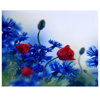 Deep Red & Blue Hues Floral Canvas Painting