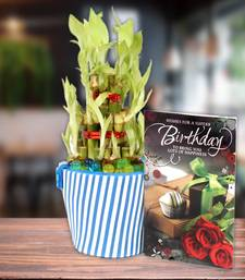 Buy Birthday Greeting Card With Good Luck Plant thanksgiving-gift online